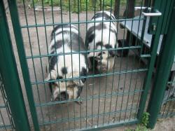 IMG_1398 the Zoo